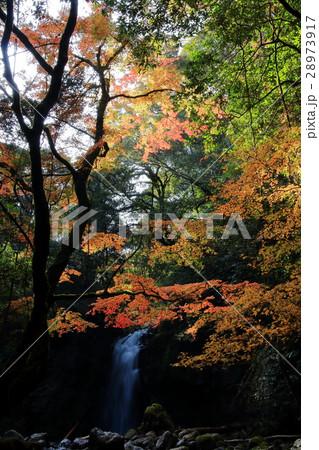 紅葉と滝 28973917