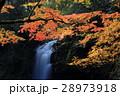 紅葉と滝 28973918