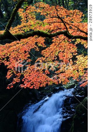 紅葉と滝 28973919