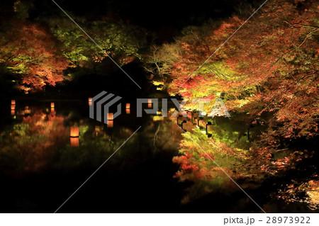 紅葉のライトアップ 28973922