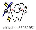 歯 虫歯予防 歯磨きのイラスト 28981951