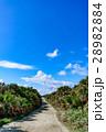 沖縄県 久高島 カベール岬へ続く道 28982884