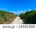 沖縄県 久高島 カベール岬へ続く道 28982886