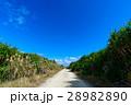 沖縄県 久高島 カベール岬へ続く道 28982890