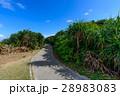 沖縄県 久高島 ロマンスロード 28983083