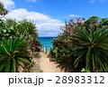 沖縄県 久高島 ロマンスロードからの眺め 28983312