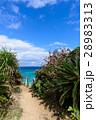 沖縄県 久高島 ロマンスロードからの眺め 28983313