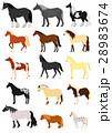 馬の種類  28983674