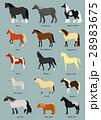 馬の種類 品種名つき 28983675