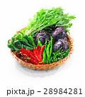 京野菜盛り合わせのイラスト 28984281
