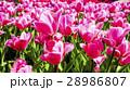 庭 庭園 ガーデンの写真 28986807