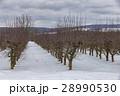 農場 果樹園 果物畑の写真 28990530