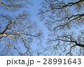 樹木 樹 ツリーの写真 28991643