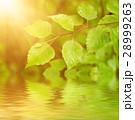 緑 背景 ウォーターの写真 28999263