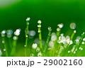 水滴 露 朝露の写真 29002160