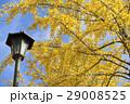 熊本テクノリサーチパークの銀杏 29008525