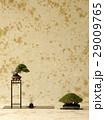 台 鉢植え 陳列の写真 29009765