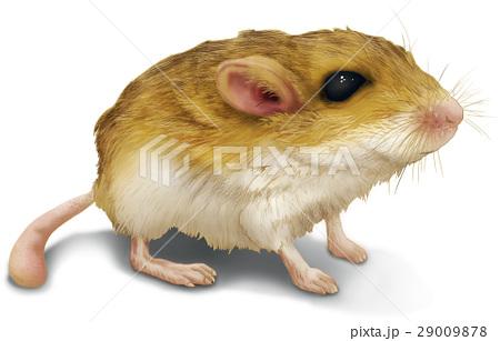 ネズミ イラスト リアル