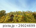 樹木 樹 ツリーの写真 29024699