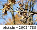 樹木 樹 ツリーの写真 29024788
