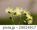 樹木 樹 ツリーの写真 29024917