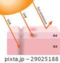 紫外線 UV UVAのイラスト 29025188