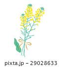 菜の花 花 植物のイラスト 29028633
