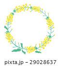 菜の花 花 植物のイラスト 29028637