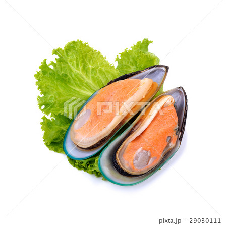 New Zealand green mussels on white backgroundの写真素材 [29030111] - PIXTA