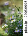 植物 工場 プランツの写真 29030996