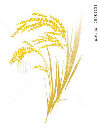 黄金色の稲穂 ベクター イラスト 29031151