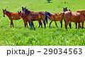動物 馬 まきばの写真 29034563