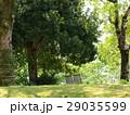 木陰の芝生の木洩れ陽 29035599