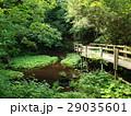 湧水をまたぐ木橋の遊歩道 29035601