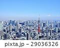 東京 都市風景 東京タワー 29036326
