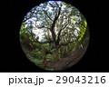 高森殿の杉 29043216