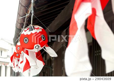 柳井 金魚ちょうちん 29043609