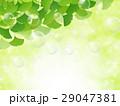 若葉 葉 春のイラスト 29047381