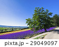 富良野 花畑 夏の写真 29049097