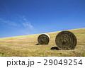 美瑛 牧草ロール 牧草の写真 29049254