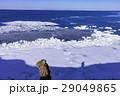 能取岬の冬景色 29049865