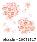 桜 サクラ 水彩のイラスト 29051517
