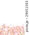 桜 サクラ 水彩のイラスト 29051563