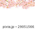桜 サクラ 水彩のイラスト 29051566