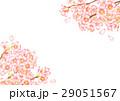 桜 サクラ 水彩のイラスト 29051567