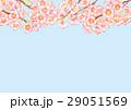 桜 サクラ 水彩のイラスト 29051569