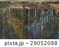 樹木 樹 ツリーの写真 29052088