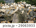 薪 樹木 樹の写真 29063933
