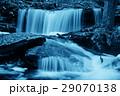 森林 林 森の写真 29070138