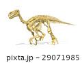 イグアノドン 骨 恐竜のイラスト 29071985